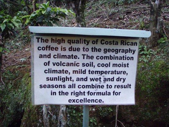 Hotel Buena Vista: Along the Coffee Trail