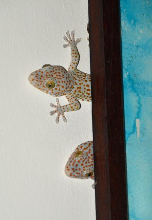 Kebun Impian: A pair of cheeky little geckos peek out from behind a painting.
