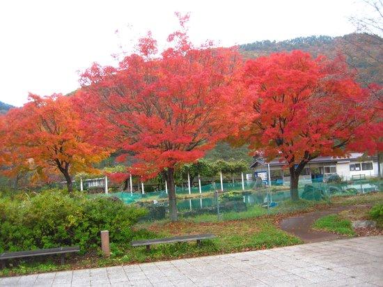 Michi-no-Eki Nijinoko: 道の駅虹の湖公園①