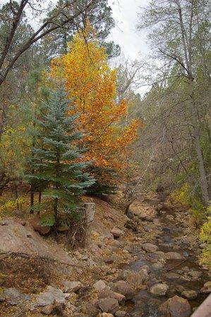 Christopher Creek Lodge: Creekside