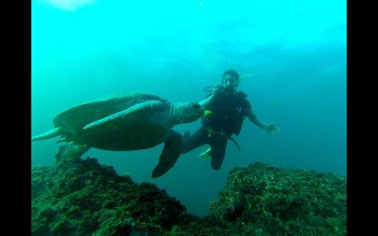 Jomtien Dive Center: A good shot :)