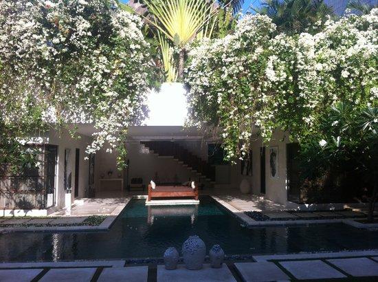 Nyaman Villas : Pool Area