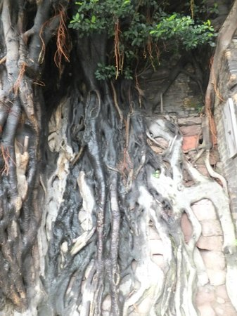 Nanfeng Ancient Kiln: There are many old trees in the kiln.