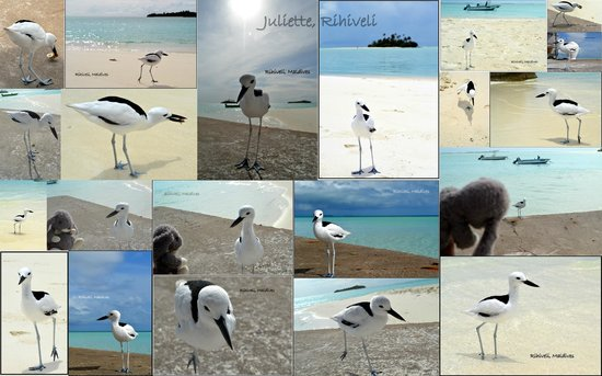 Rihiveli by Castaway Hotels & Escapes: Rihiveli mascot, Juliette
