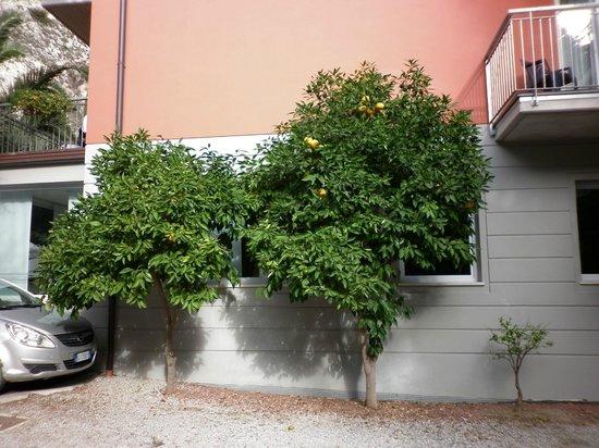 Aktivhotel Santalucia: alberi di arance