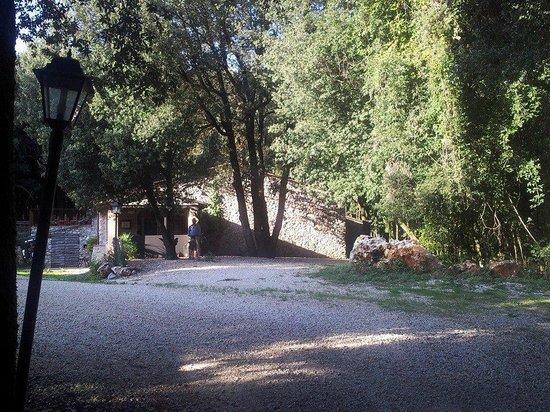 Agriturismo Surripa : Agriturismo sala ristorazione con scorcio del bosco circostante