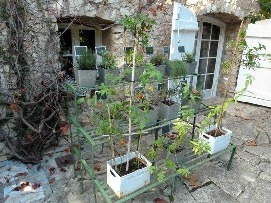La Maison de Rocbaron: L'herboristerie .