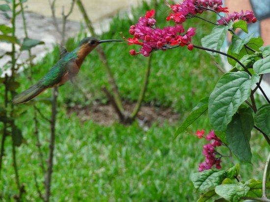 El Artesano Wine and Cheese Restaurant: Hummingbirds everywhere