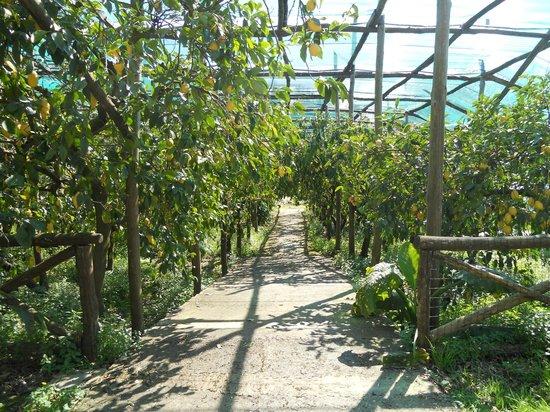 Tenuta Montecorbo: Il giardino coltivato