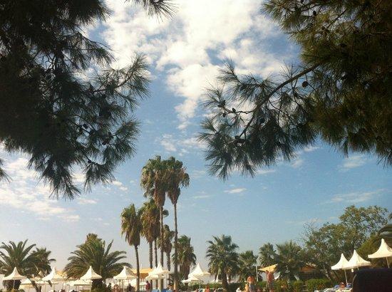 Turquoise Resort Hotel & Spa : Небо и сосны
