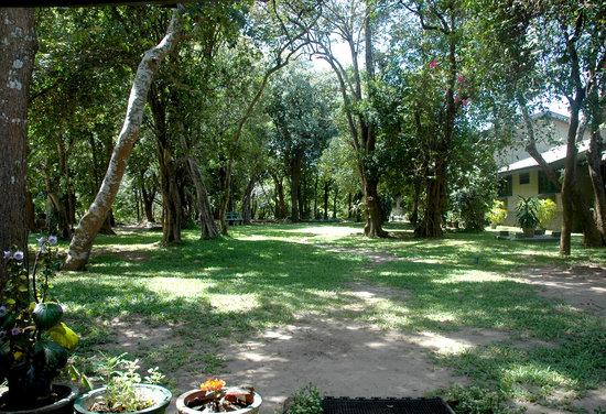 Giritale Hotel Garden
