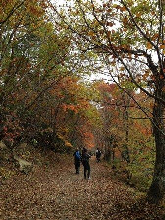 Kannonnuma Forest Park: 紅葉の観音沼遊歩道