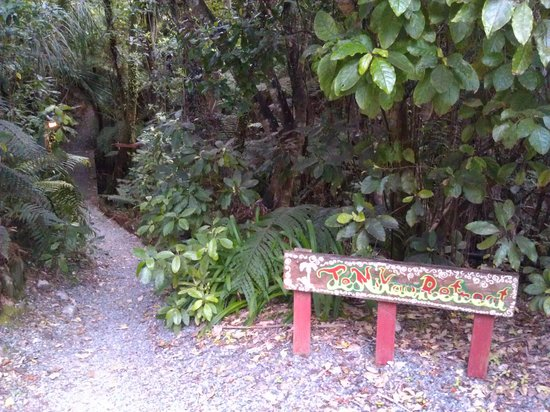 Te Nikau Retreat: Upplysta gångar genom regnskog