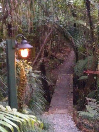 Te Nikau Retreat: Upplysta gångar genom regnskogen