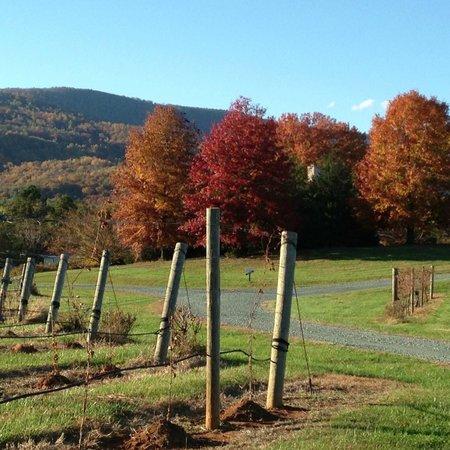 Monticello Appellation Wine Tours : White Hall
