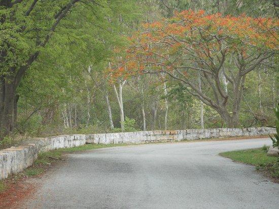 Horsley Hills: Gulmohar Trees