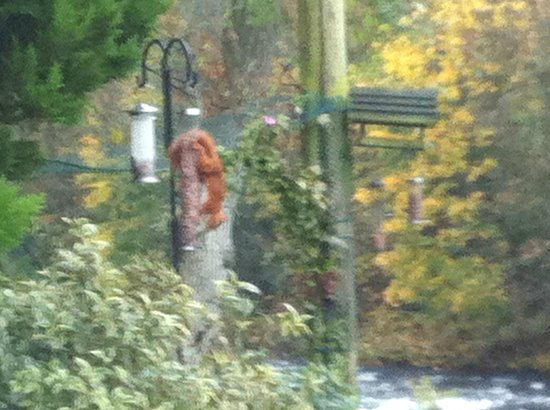 Riverside Mill Bed and Breakfast: red squirrel