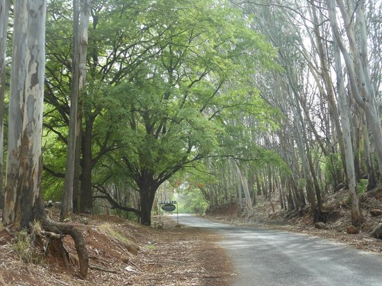 Chittoor, Índia: Ghat Road to Horsley Hills