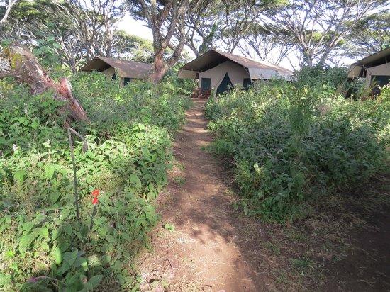 Lemala Ngorongoro Tented Camp: Tentes
