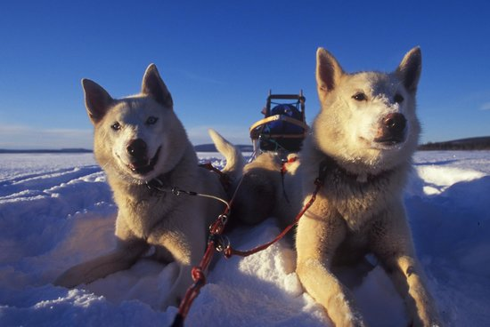 Arctic Adventure Tours - Day Tours: Join us on the next adventure!