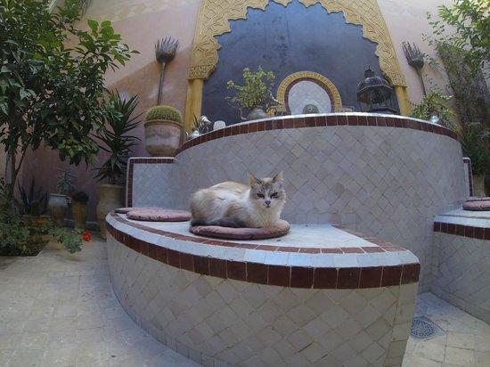 Riad Tara Hotel & Spa: La star du Riad
