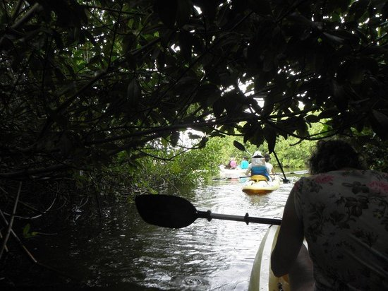 Mangrove Information Center Kayak & Snorkel Excursions: In een van de mangrovetunneltjes