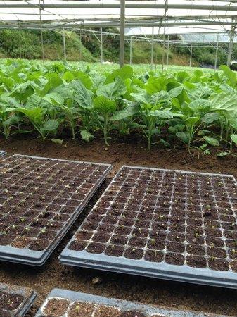 Cameron Organic Produce: organic farm