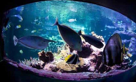 Les poissons tropicaux de l 39 aquarium abyssal picture of for Poisson tropicaux aquarium