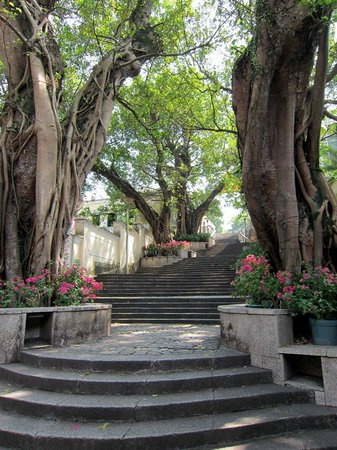 Taipa Village Macau : Trees. Macau has very high population density, so places like this are refreshing.