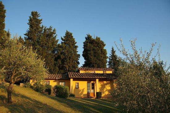 Il Poggetto: la cipressia (from the pool)