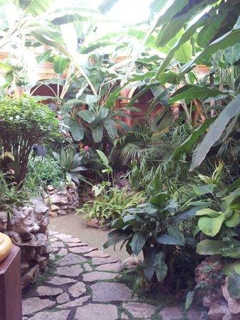 Hotel Casa Mexicana: Un pequeño jardin a un lado de Recepción