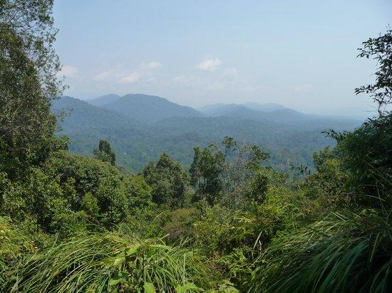 Taman Negara National Park: Panorama dalla Bukit Terisek