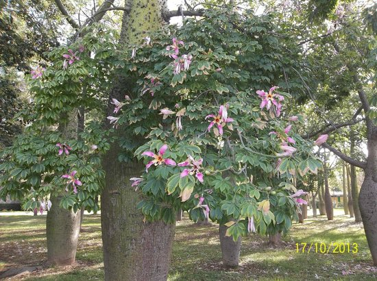 Antiguo Cauce del Rio Turia: Tree with lily like flowers