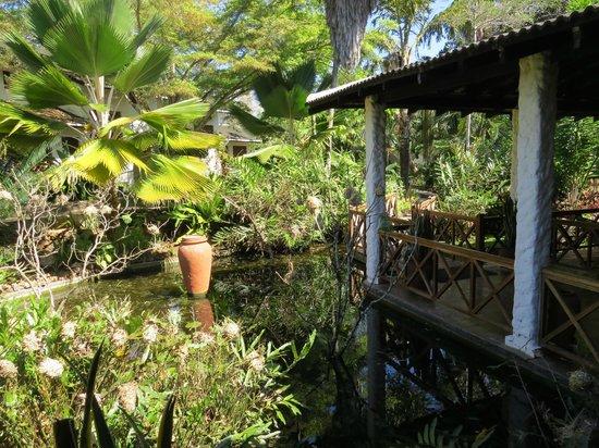 Pinewood Beach Resort & Spa: bassin entourant la salle à manger
