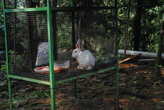 Sunrise Valley Resort: rabbit on property