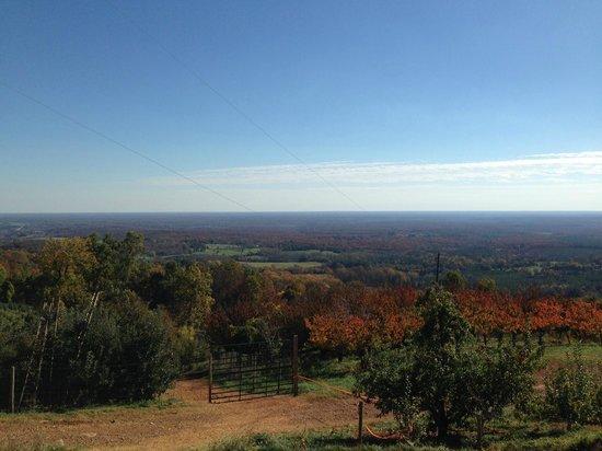 Carter Mountain Orchard: Carter Mountain in Charlottesville, VA
