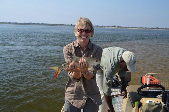 "Chiawa Camp : A ""too small to bother weighing"" tiger fish"