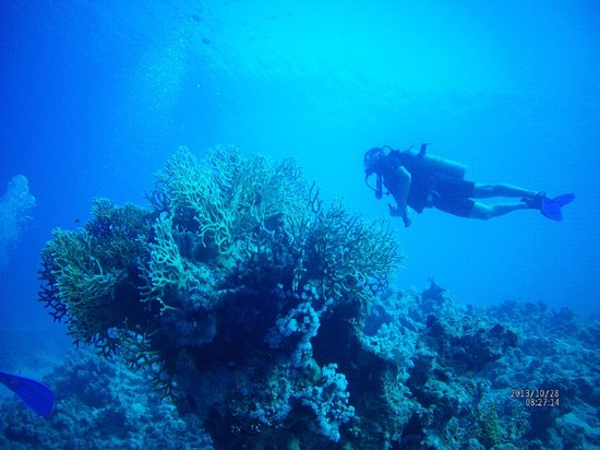 Diving picture of reef oasis dive club sharm el sheikh - Reef oasis dive club ...