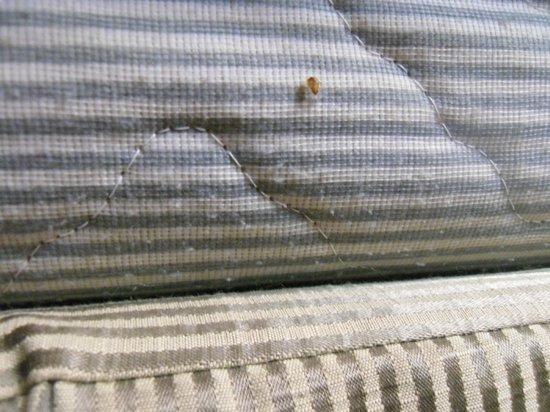 Econo Lodge Atlanta Airport East: Bed bug