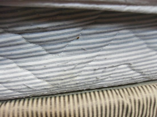 Econo Lodge Atlanta Airport East : Bed bug