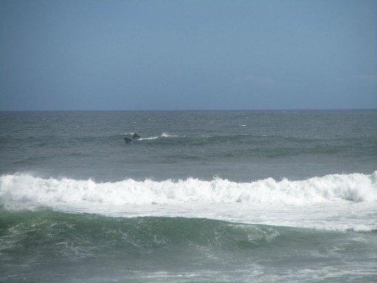Grotto Beach: Vue baleine (sans zoom)
