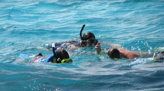 Seven Seas Charters Day Tours : Snorkeling with Captain Shaun.