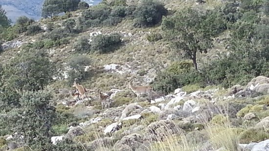 Sierras de Tejeda, Almijara y Alahama