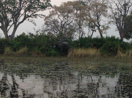 Jacana Tented Safari Camp : Amazing