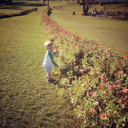 Seward Farms: flower lane