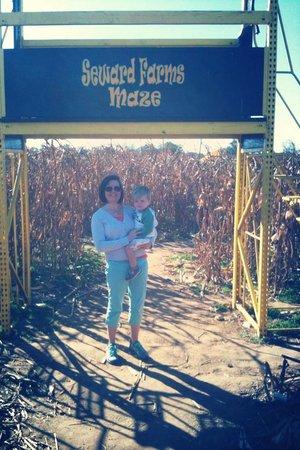 Seward Farms: corn maze