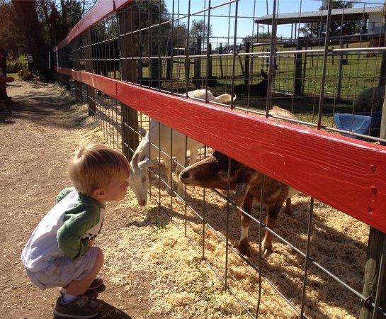 Seward Farms: petting zoo