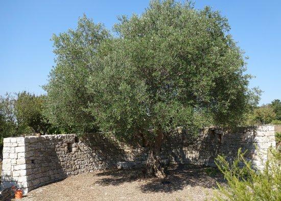 Fuoridalmondo: Giancarlo's Tree of Life