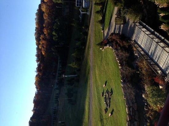 Bear Creek Mountain Resort : Outdoor area