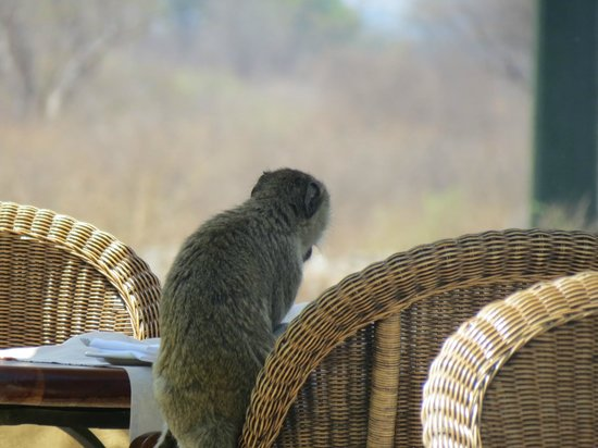 Ilala Lodge: a friend during an afternoon drink at the bar